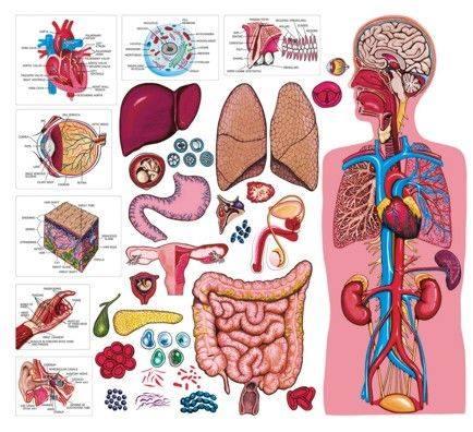 Ora de sănătate - curs de cunoaștere și autocunoaștere
