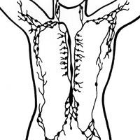 Sistemul digestiv si sistemul limfatic