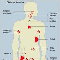 Sistemul imun - notiuni teoretice
